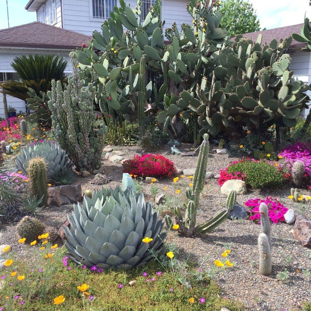 Street Cactus Garden  Sacramento, CA