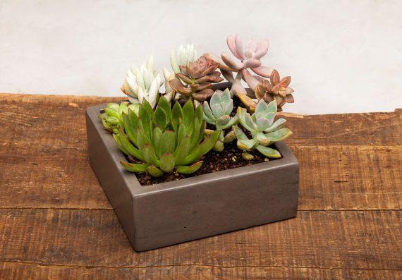 Concrete Planter Centerpiece  7 Square Centerpiece by OpusStone, $45.00