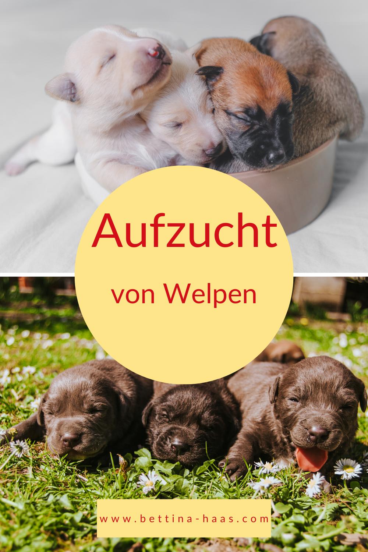 Aufzucht Von Welpen In 2020 Welpen Hundchen Training Hundchen Ubung