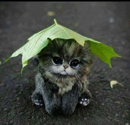 I Felled Over Baby Animals Super Cute Cute Animal Names Cute