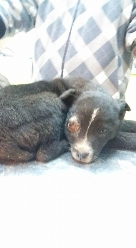 Pin auf Hunde in Not suchen ein Zuhause Hundevermittlung