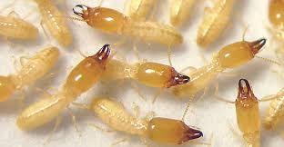 شركة مكافحة حشرات بمكة رش مبيدات للايجار 00201010116604 Cleaning Services Company Food Pest Control