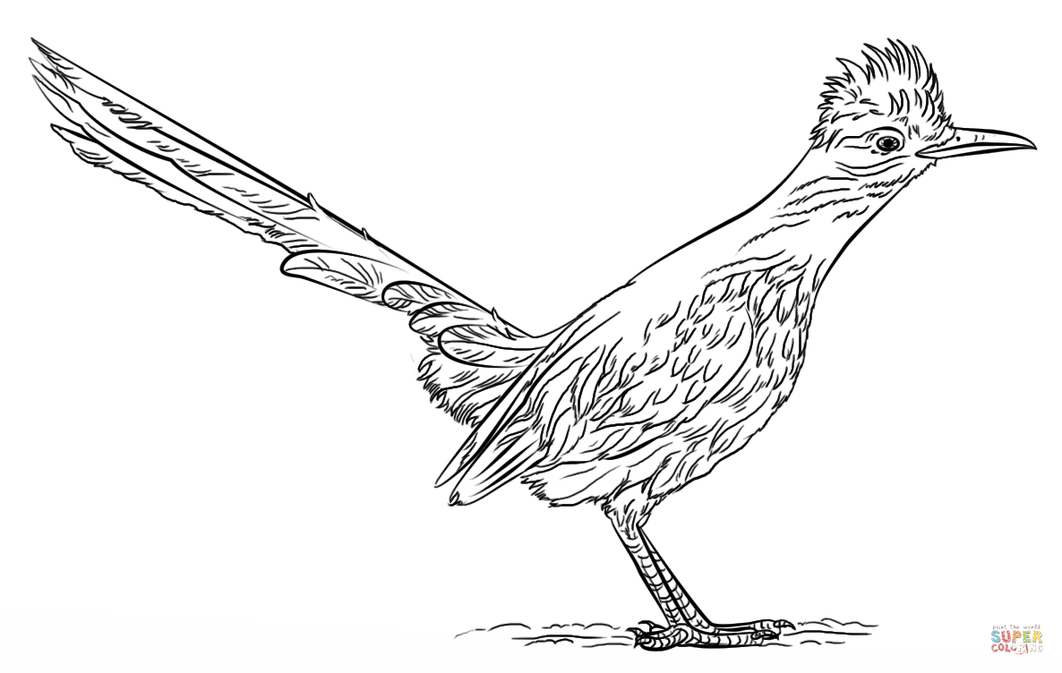 Roadrunner Coloring Page Png 1186 752 Road Runner Road Runner Bird Coloring Pages