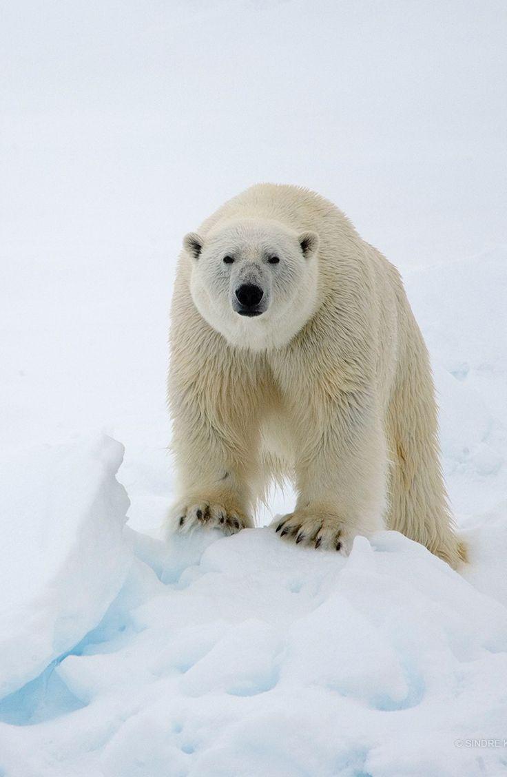 Pin de Dania Villalobos en Bears | Pinterest | Osos, Fotografía ...