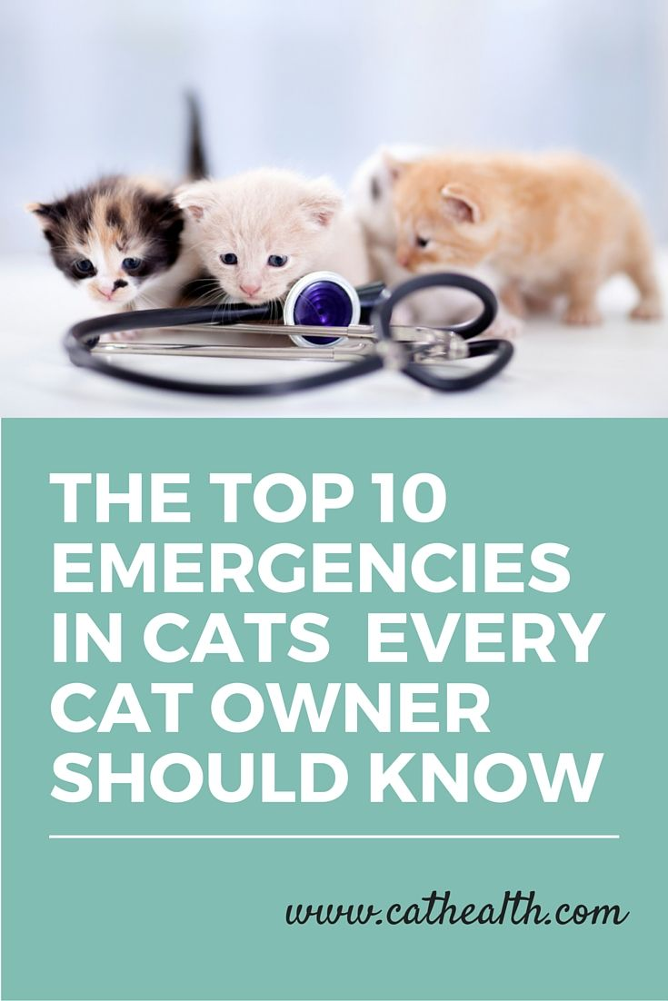 Cats Often Become Reclusive And Hide When They Are Not Feeling Well Which Makes Knowing When They Need To Be Seen By Yo Cat Care Cat Having Kittens Kitten Care