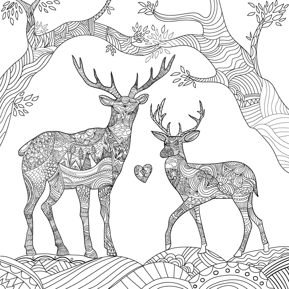 Pin by Lorrie Antwine on Coloring Deer coloring pages