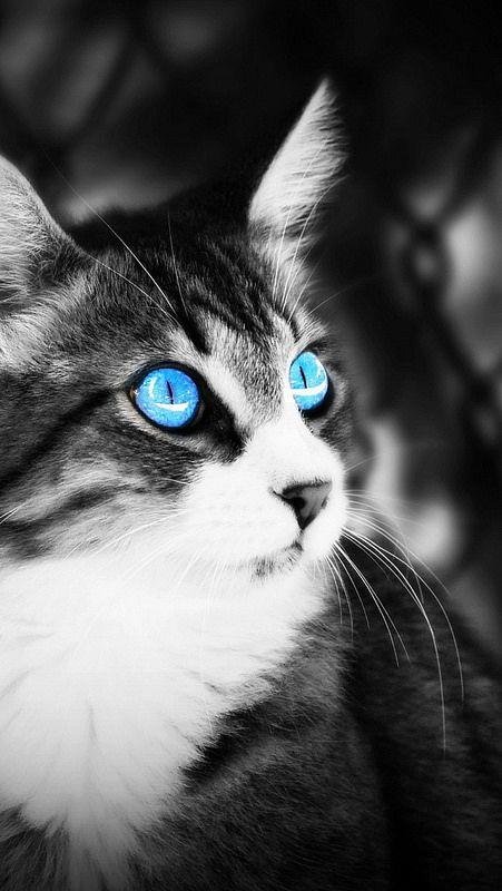 Cute Cats Pics Hd Cute Cat Wallpaper Baby Cats Cute Cats