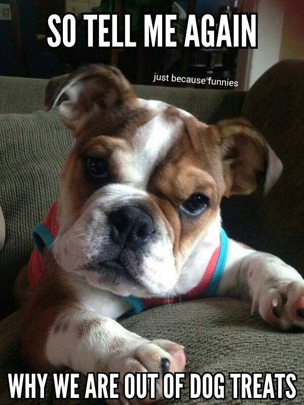 Pin By Diane Bleyer On Best Bulldogs Funny Dog Jokes Dog Jokes