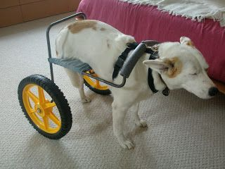 Home-made dog wheelchair