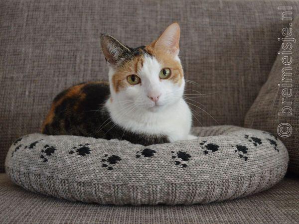 Breipatroon Kattenmand Een Nederlandse Vertaling Cats Cats Cats N