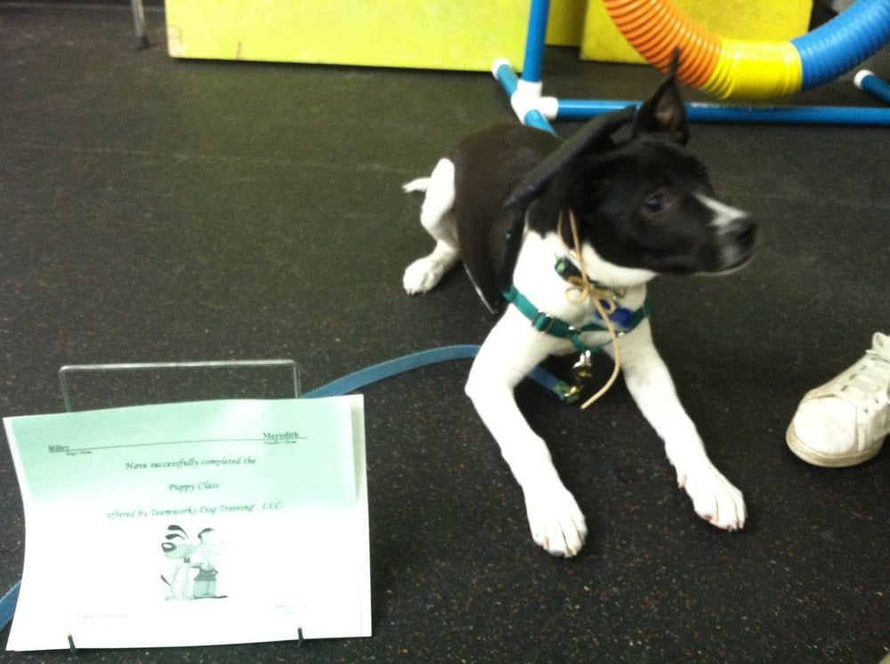 Dog Training Teamworks Dog Training In North Carolina Teamworks