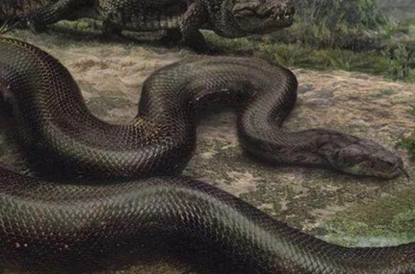 Titanoboa ular terbesar di dunia danifin pinterest titanoboa ular terbesar di dunia reheart Images