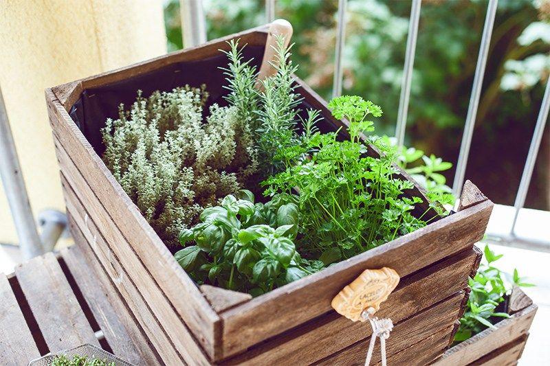 Do it yourself - Kräutergarten für den Balkon aus Weinkisten / Obstkisten einfach selbst gemacht! #kräutergartenbalkon