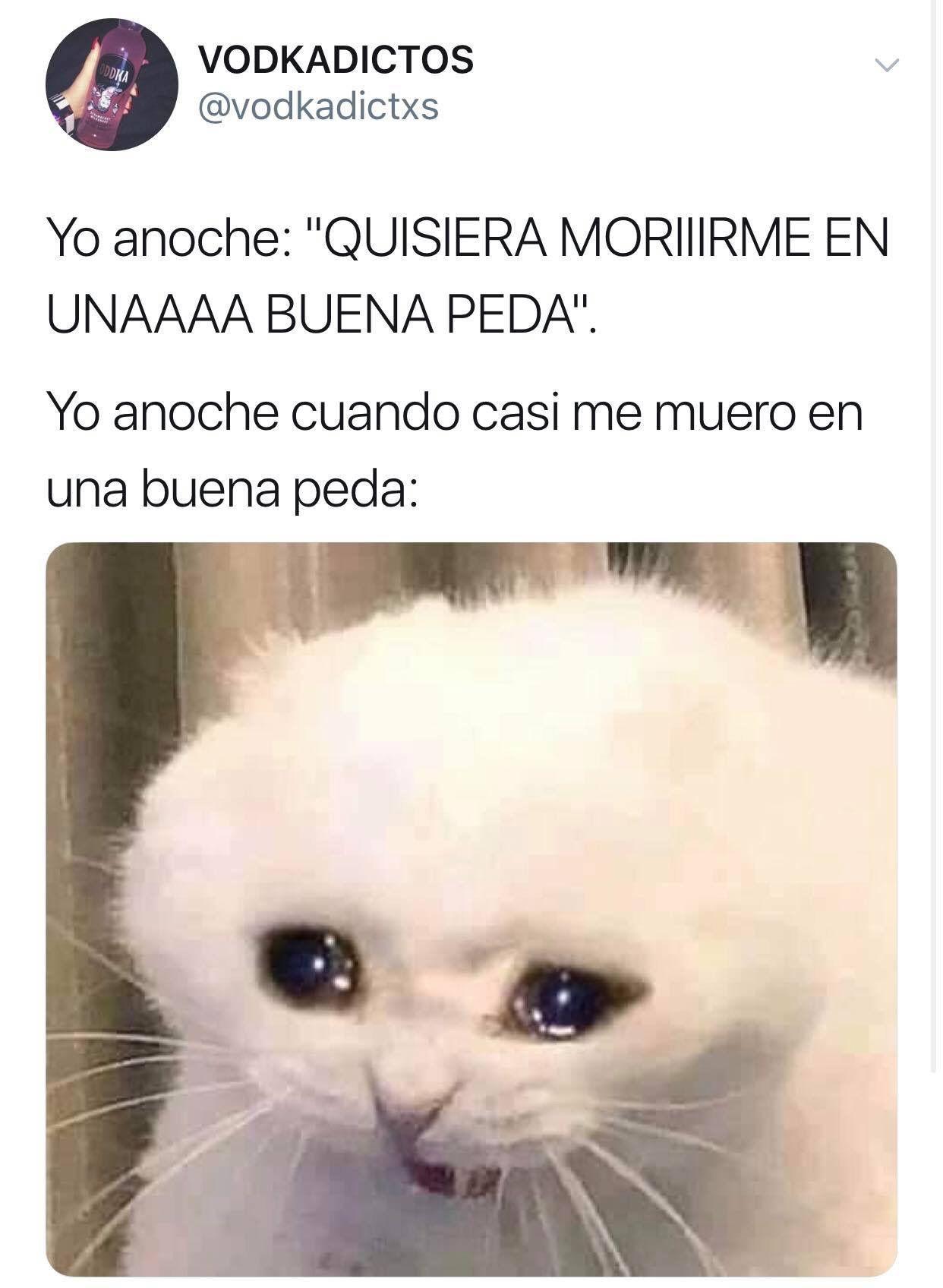 Memes Karen Gatos Espanol Memes Karen Memes Memes Espanol Graciosos Memes Divertidos