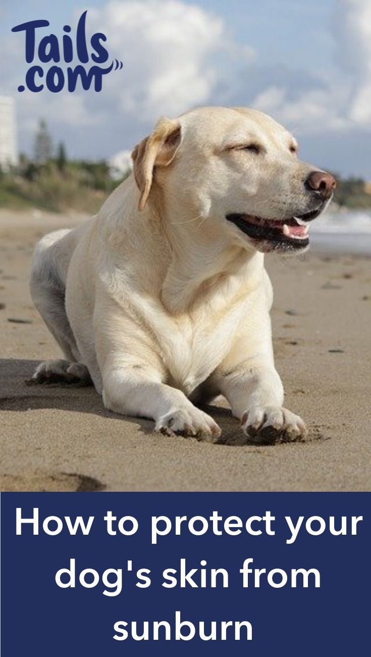 How to protect your dog's skin from sunburn Dog sun