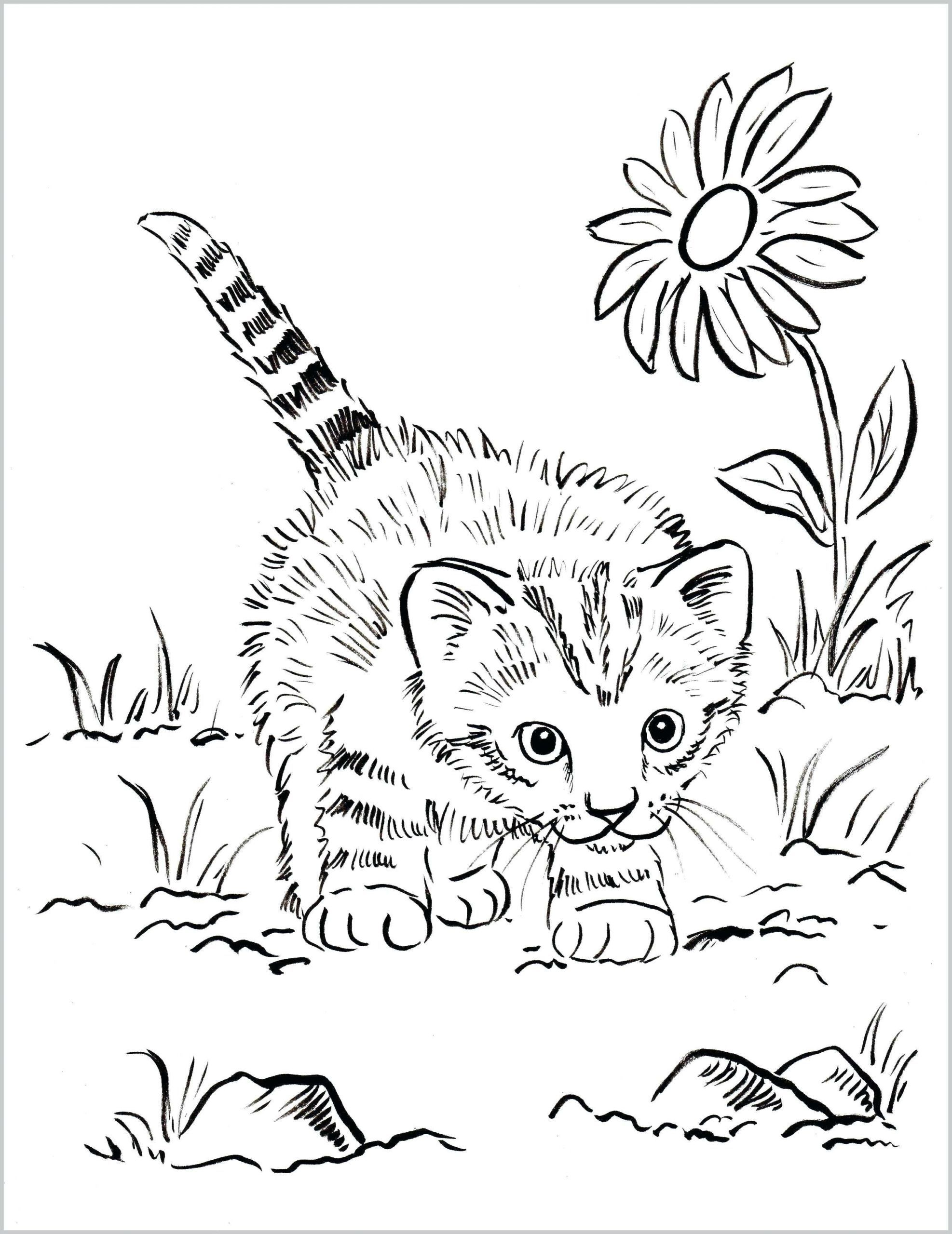 4 Realistic Cat Coloring Pages Coloring Cat Color Pages Printable