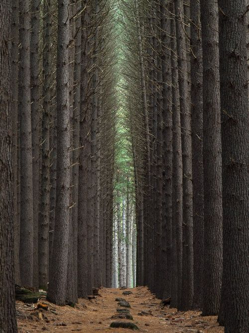 Sentinels In The Forest Tree Have A Nice Trip Cool Photos