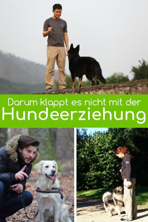 9 Gründe, warum die Hundeerziehung scheitert