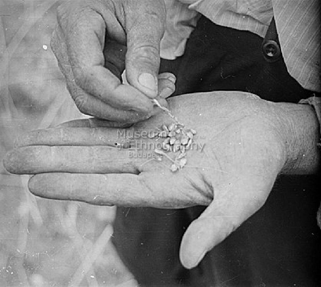 Réger Endre FőcímAratás Alcím Tartalmi leírásAz arató tenyerében szétdörzsölt magokat nézi. Készítés ideje1950.06.28 Készítés helyeRákospalota     Pest-Pilis-Solt-Kiskun vm.     Magyarország Tárgymutató,