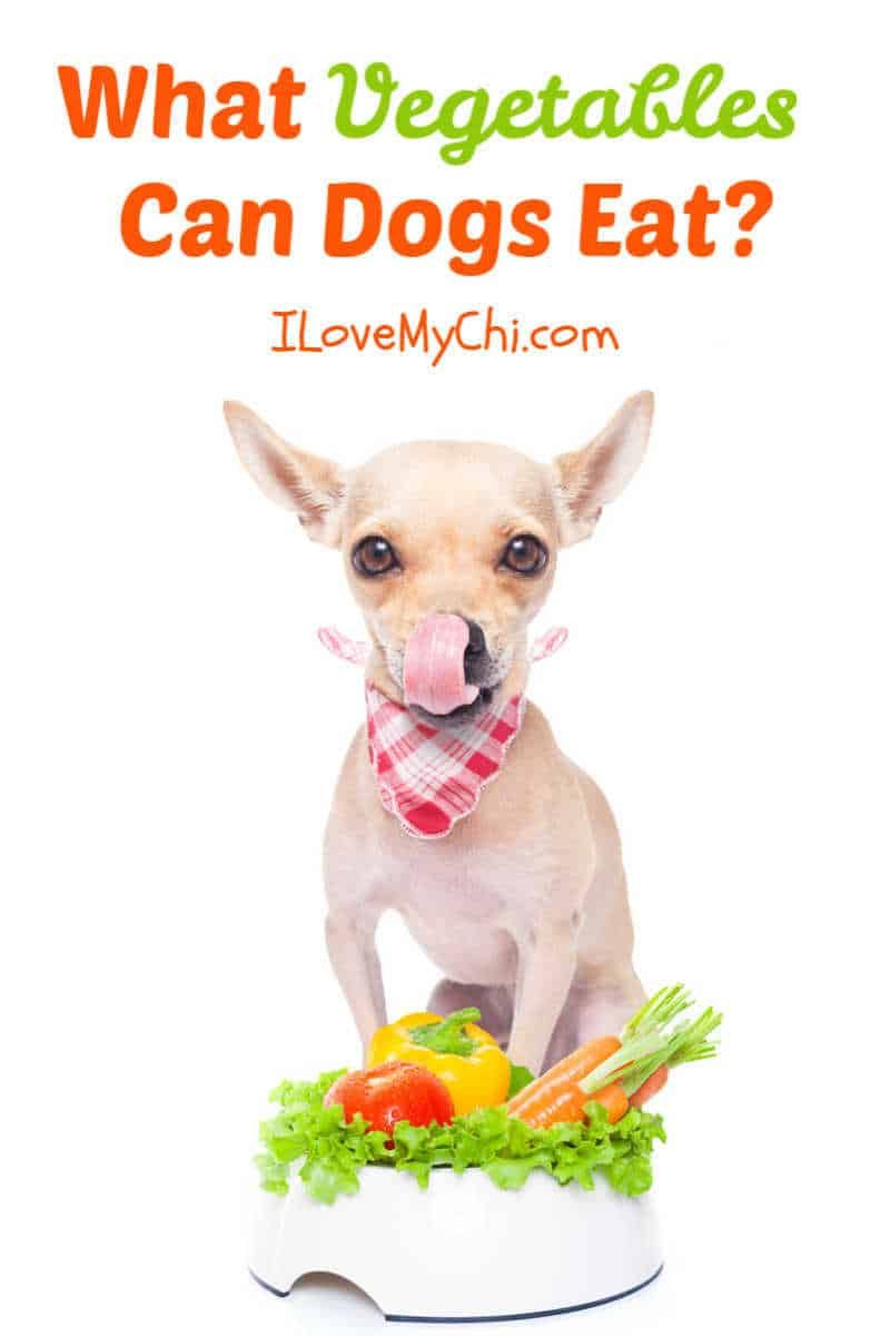 What Vegetables Can Dogs Eat Can Dogs Eat Dog Eating Dog