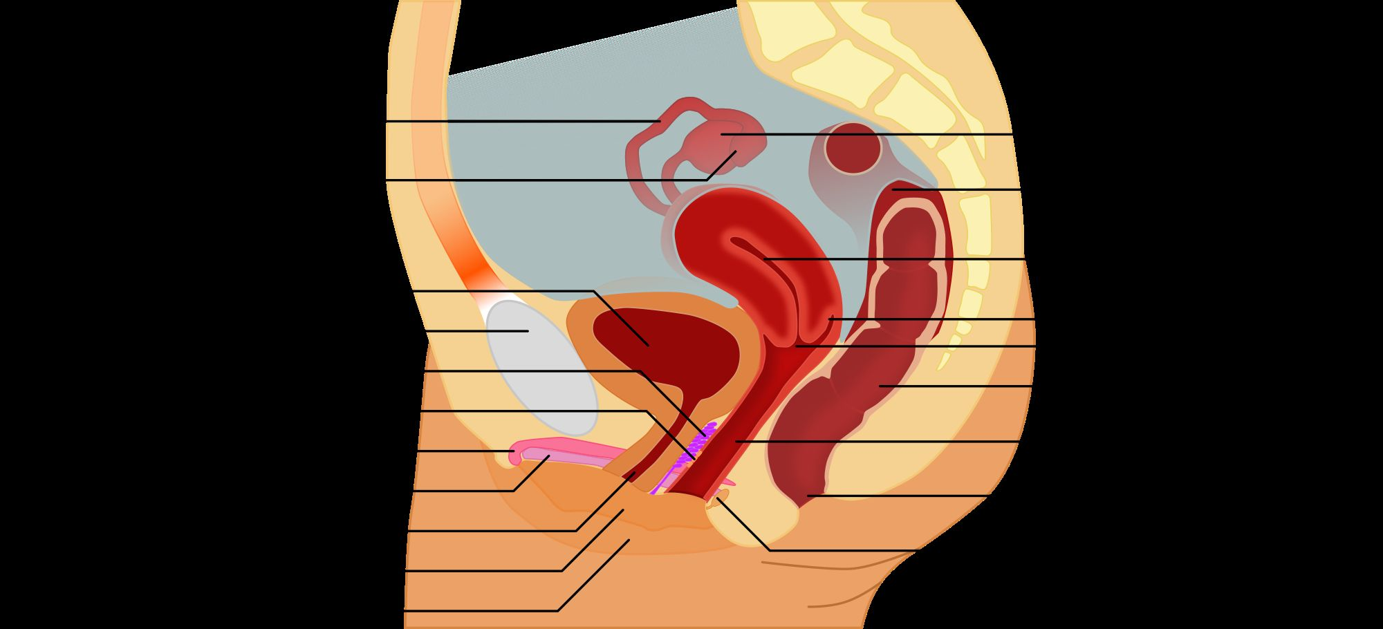 Diagram Female Anatomy Koibana Info Human Anatomy Picture Female Anatomy Human Body Anatomy