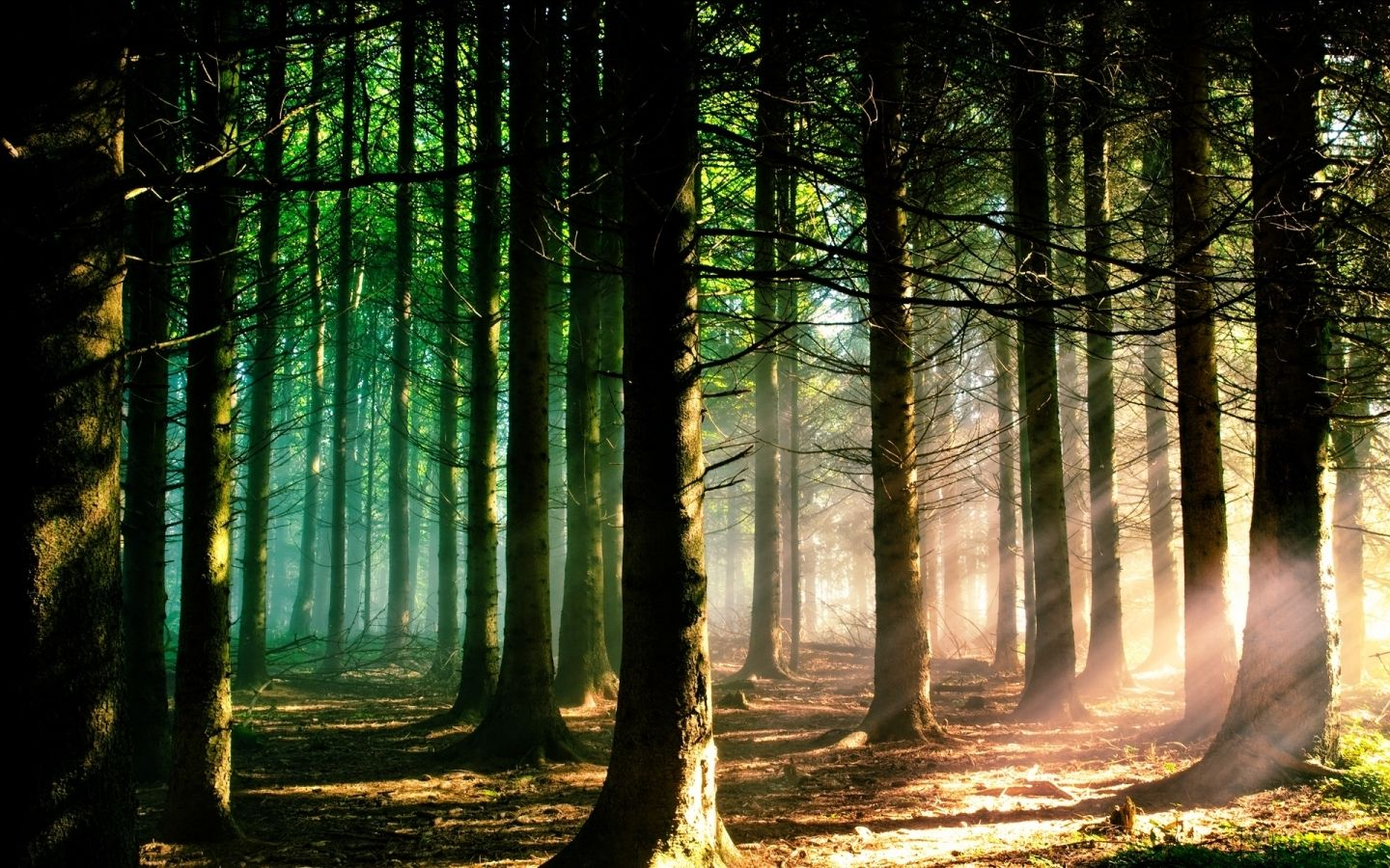 Must see Wallpaper Macbook Forest - 3e2842f6b27093668734d3ef90fbad45  Pic_955222.jpg
