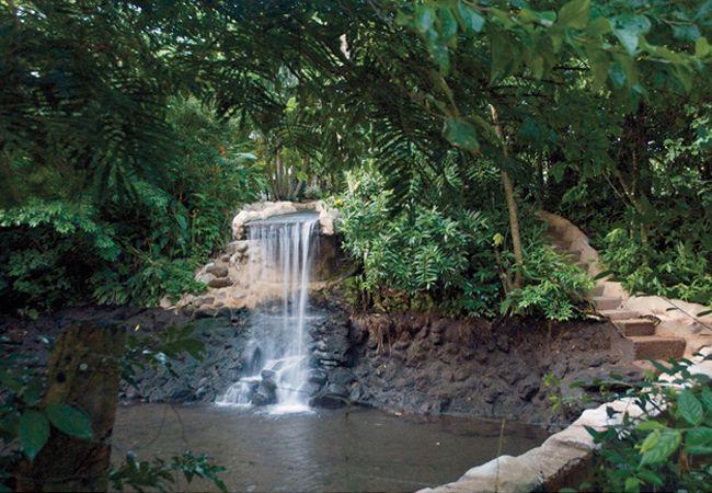 3e28baa295257df1afba7944666fde83 - Pura Vida Gardens And Waterfalls Jaco