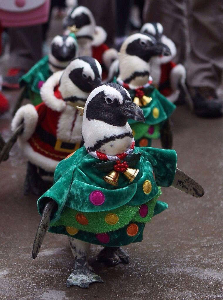 Penguin Park leggings