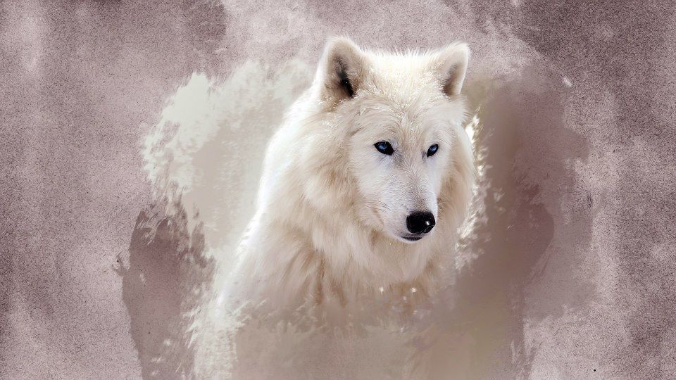 Pin by Cocoagirl on My Saves Wolf wallpaper, Wolf