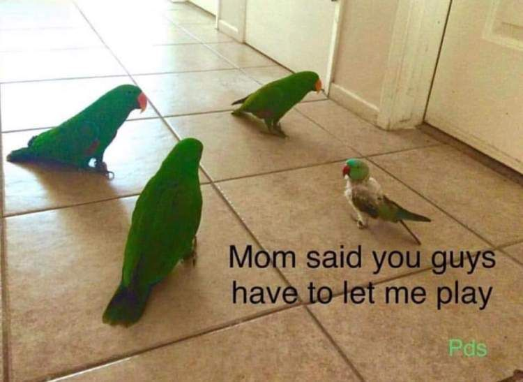 21 Birb Memes For The Bird Lovers Out There Funny Birds Bird