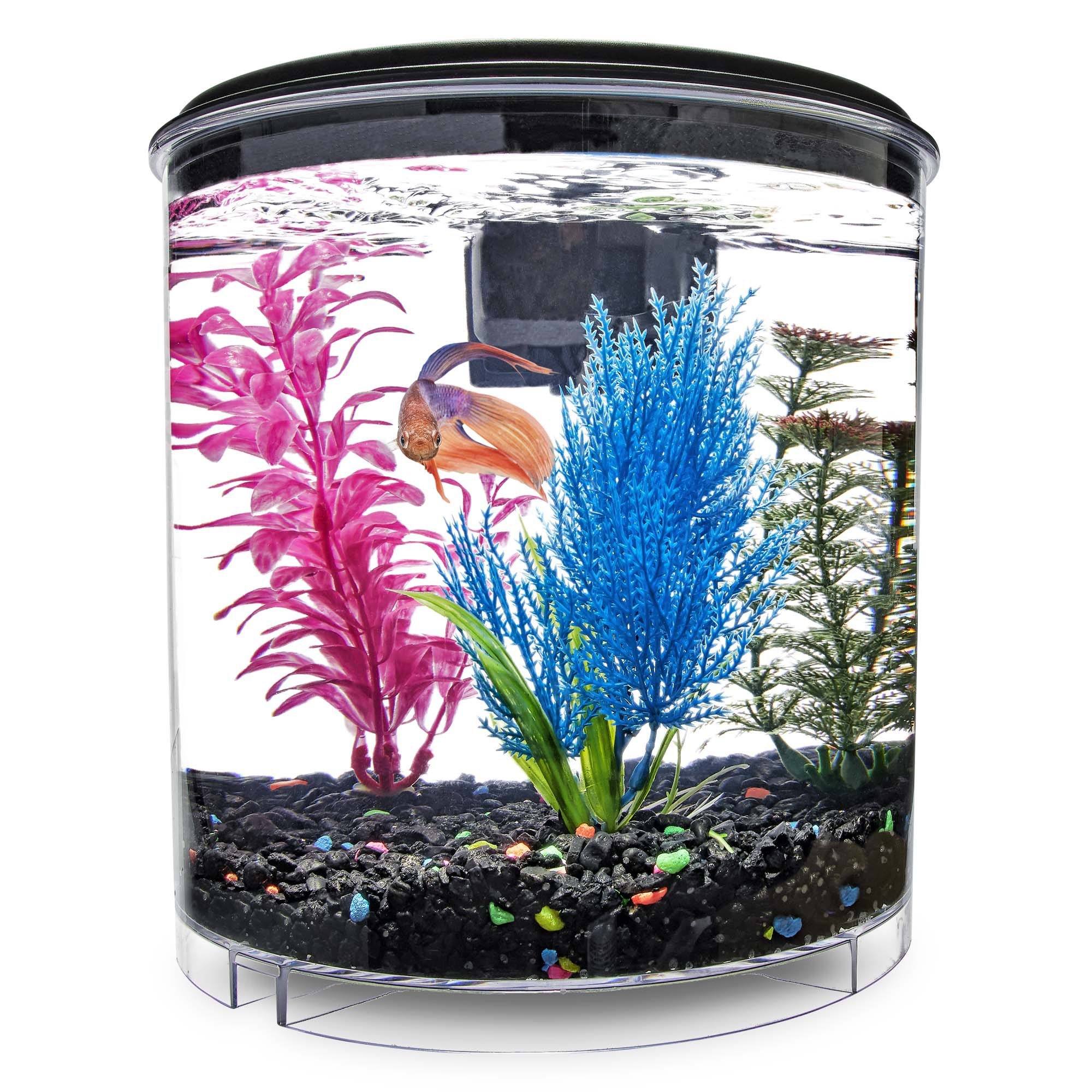 Imagitarium 2 Gallon Cumberland Tank Petco In 2020 Petco Fish Tank Gallon