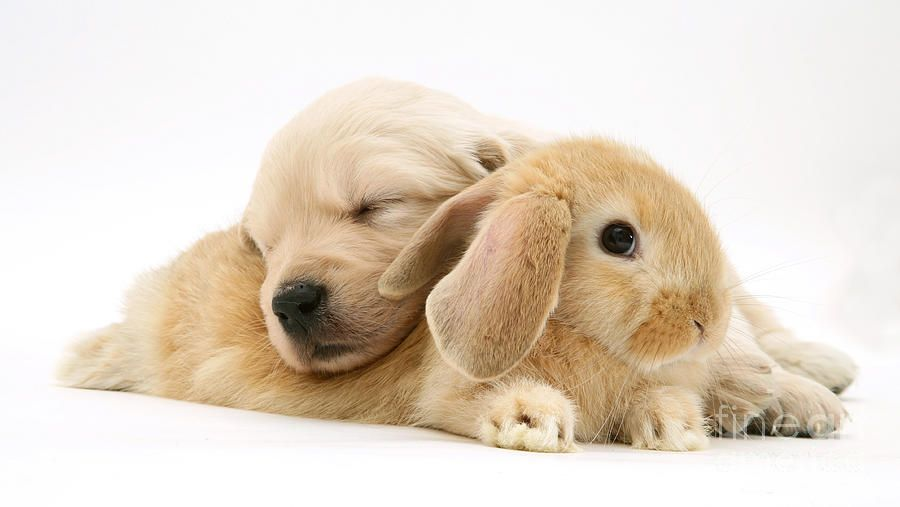 Image Result For Puppies And Bunnies Animals Pinterest Puppies