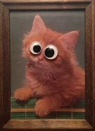 Googly Kitten