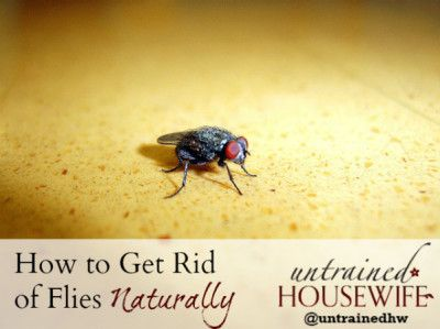 How-to-Get-Rid-of-Flies-Naturally   Get rid of flies, The ...