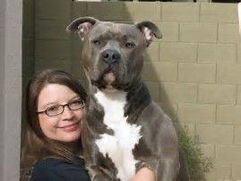 Image Result For Razor Edge Watchdog Pitbulls Pitbull Dog Puppy