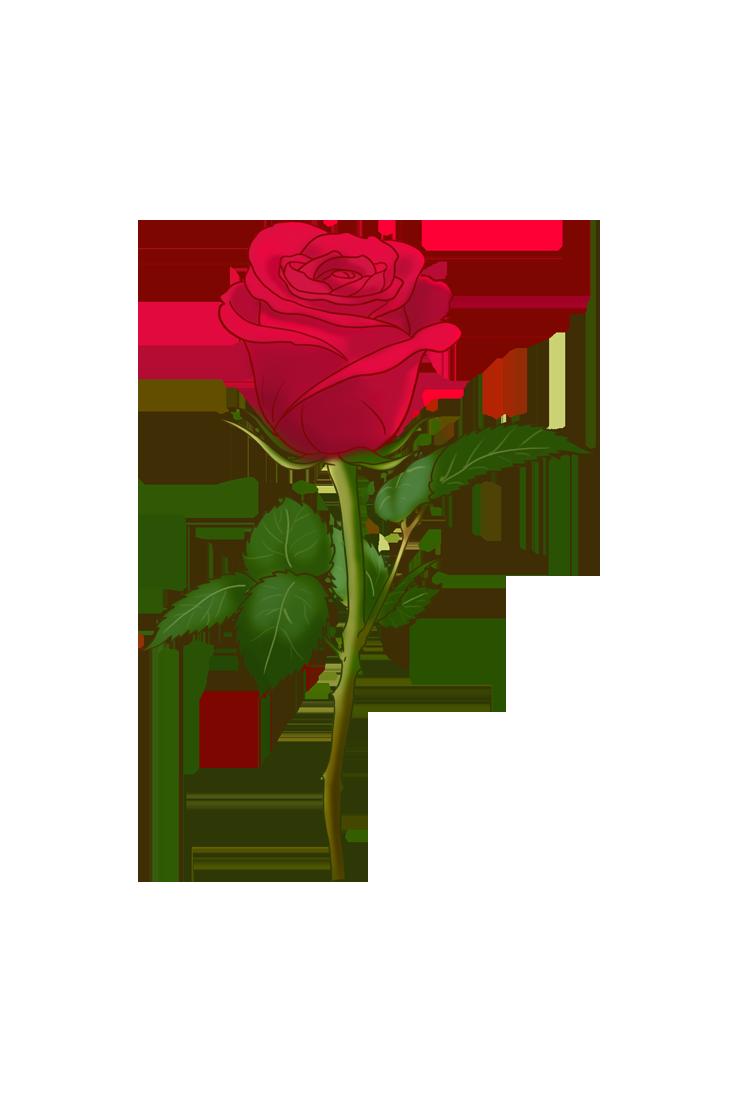 roses wallpaper iphone