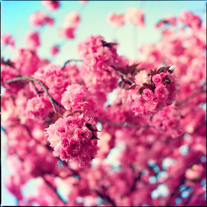 memories of spring II by PatriciaD