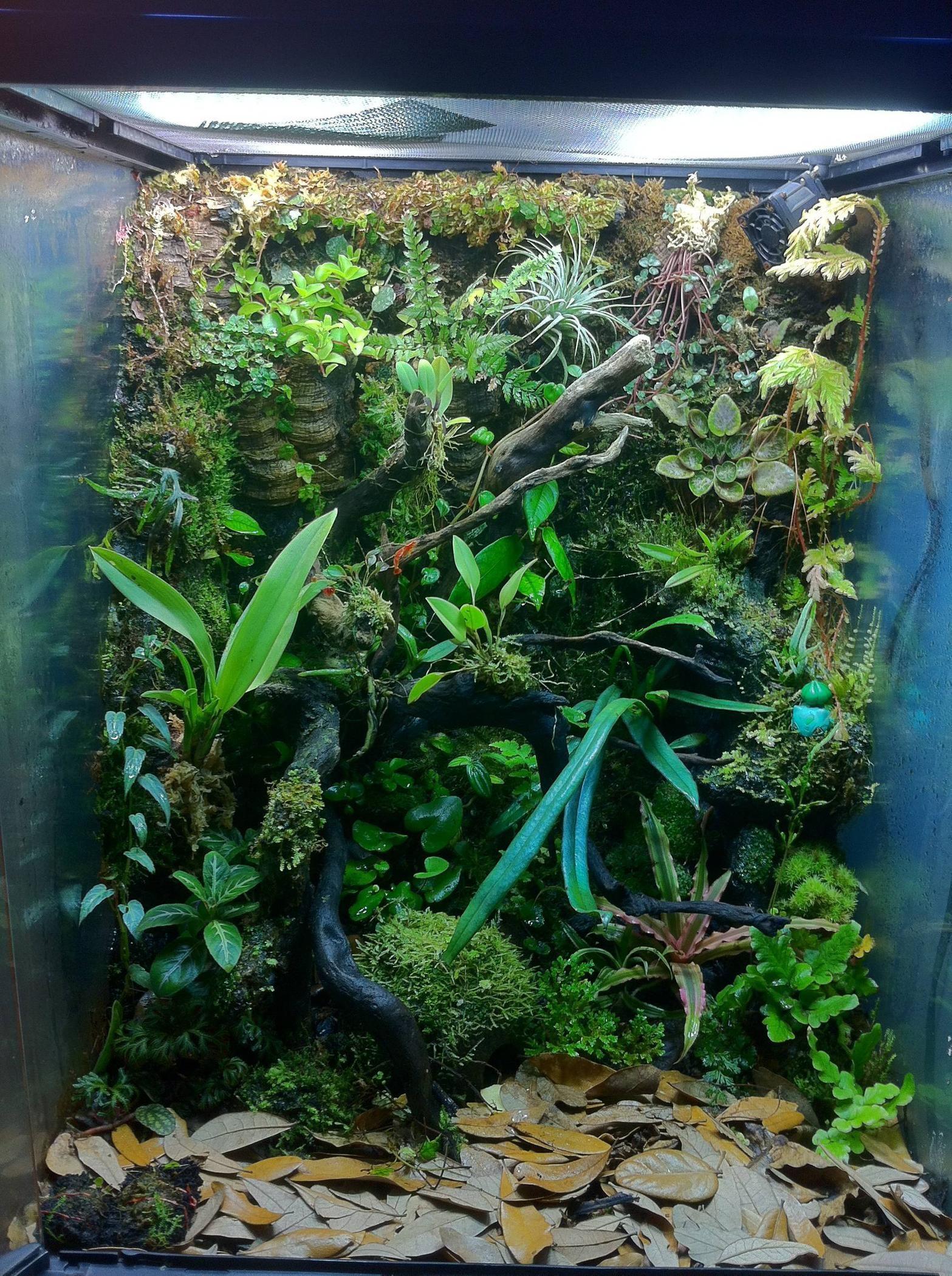 Vivarium Setup For Poison Dart Frogs Gardens Aquascaping Frog