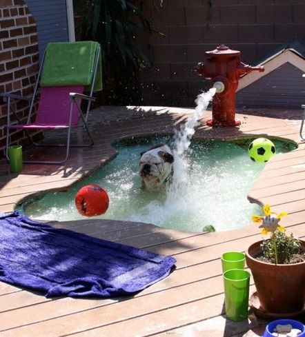 A Dog Playing In His Backyard Pool With Fire Hydrant Fountain Pethubplay Dog Pool Dog Swimming Pools Diy Dog Stuff