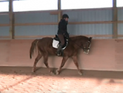 Adult Amateur dressage prospect! Naturally balanced 2010 AQHA gelding with steady gaits. Uncomplicated and a fast learner. Scored in the high 60's at first schooling show and now ready to compete at Training level in 2014! Versatile horse to develop. $5,500