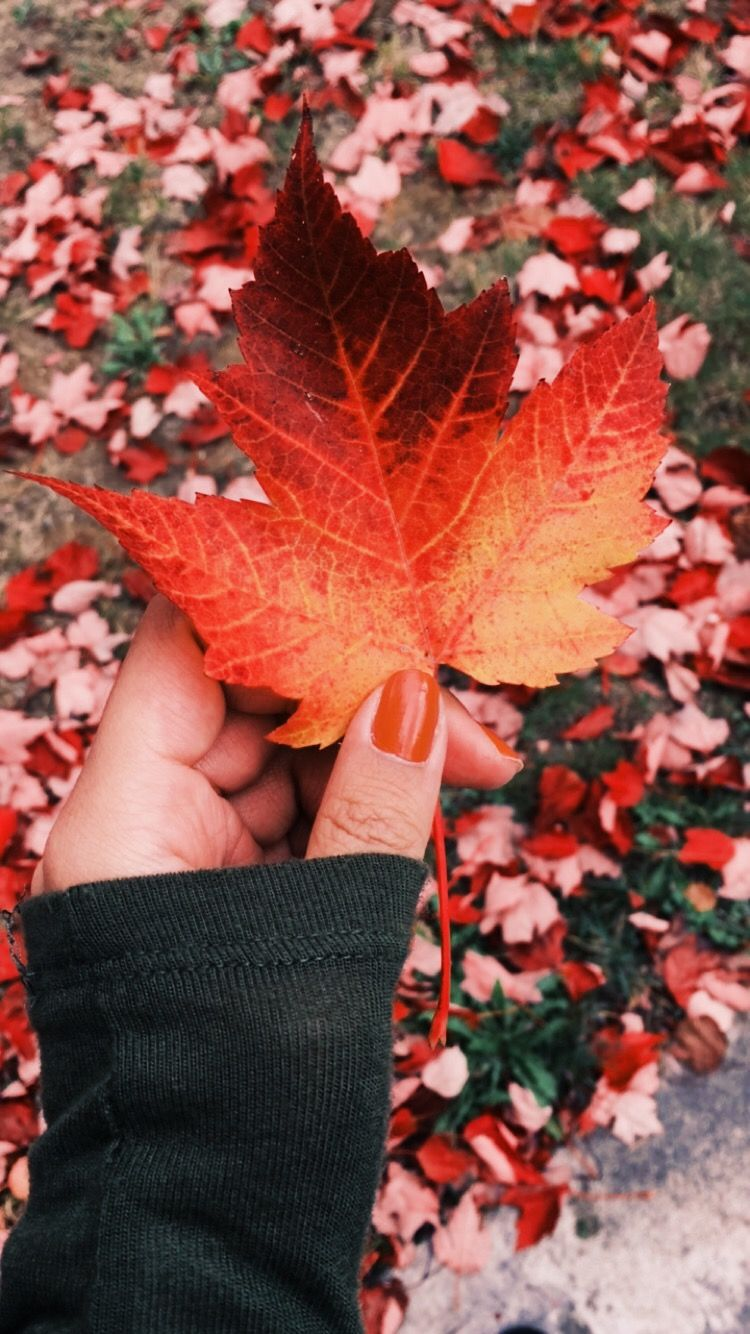 That leaf has so many gorgeous hues