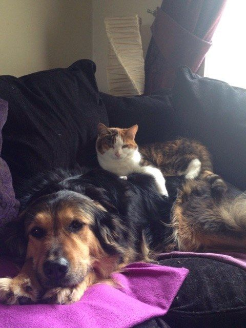 sometimes you just need to see a cat and dog hangin out together
