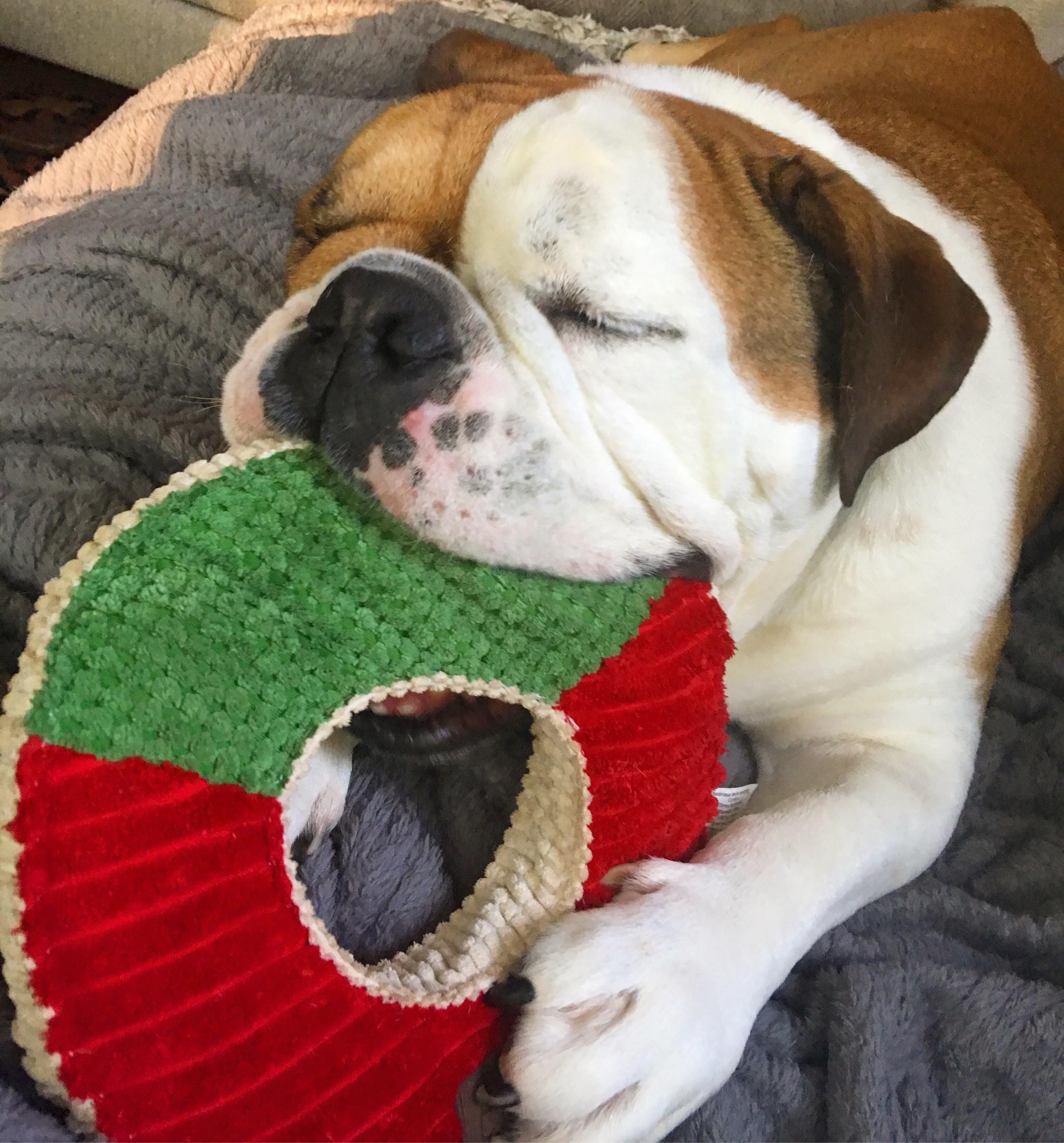 Teddy is a happy doggo todayhttps://i.redd.it/g7nkmr7v1ruy.jpg