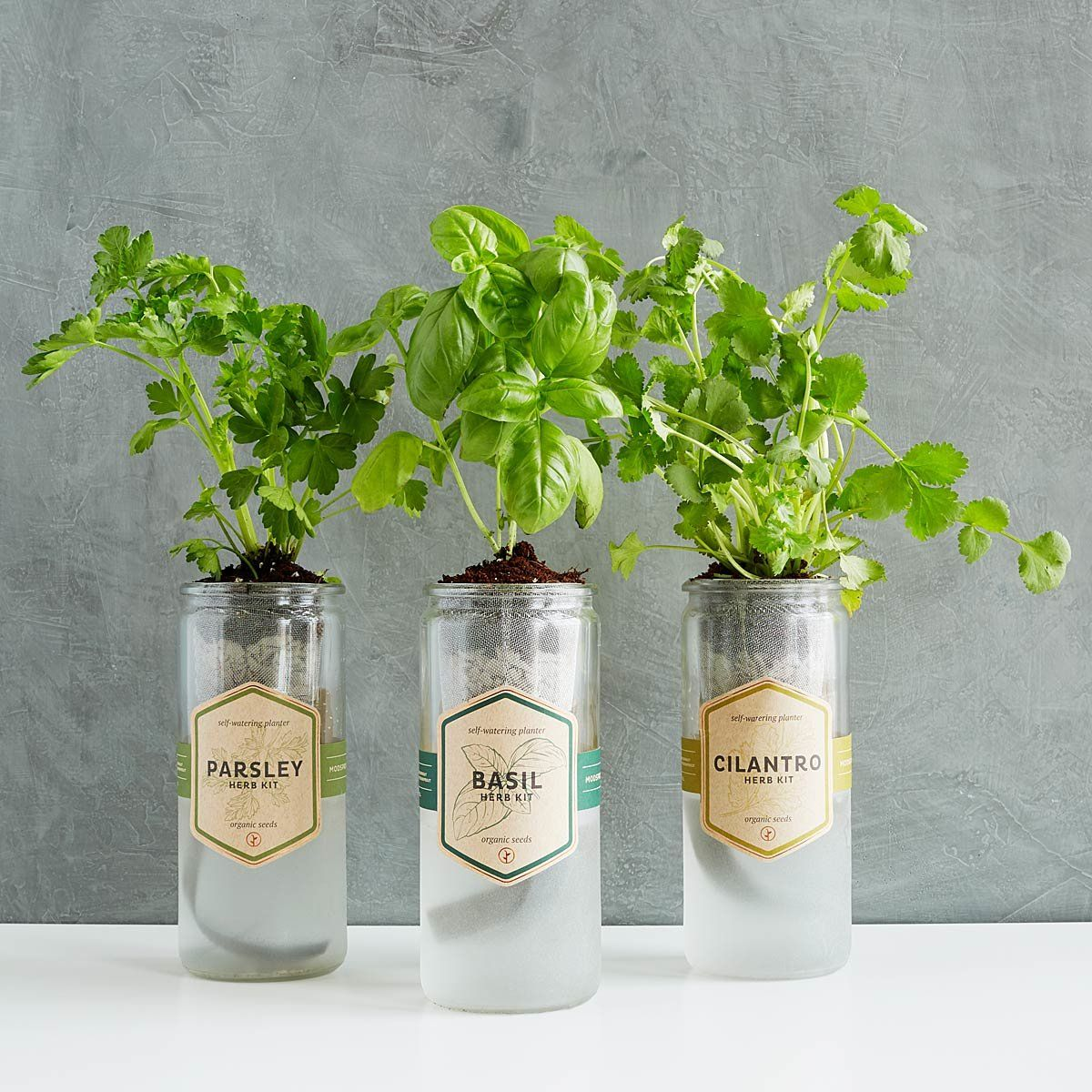 These Garden Starter Kits Make It Easy To Grow Herbs Vegetables