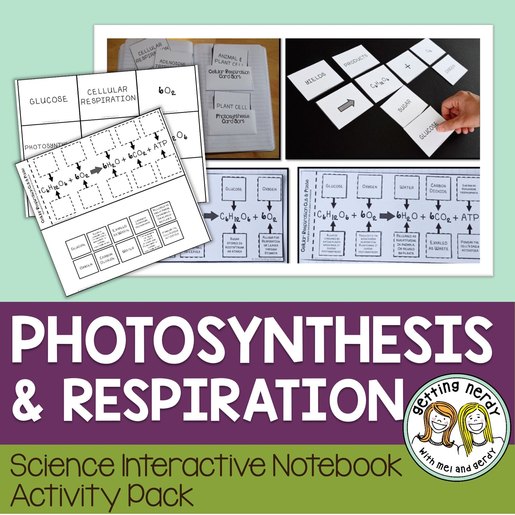 Science Interactive Notebook Respiration and