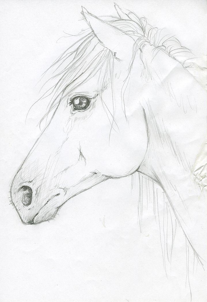Horse Head By Silken Deviantart Com On Deviantart Kolien