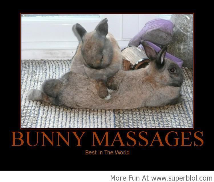 Massage Memes Bunny Massage Superblol Health And