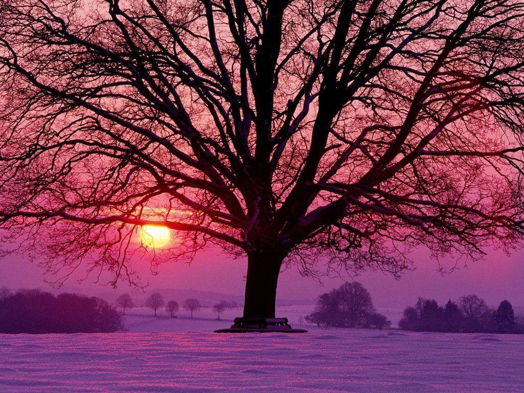 papel de parede Inverno (com imagens) | Pôr do sol roxo, Imagens ...