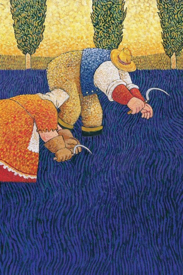 Lowell Herrero Lavender harvest