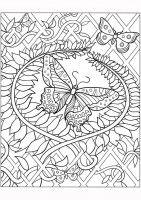 vlinder01 a4 kleurboeken voor volwassenen